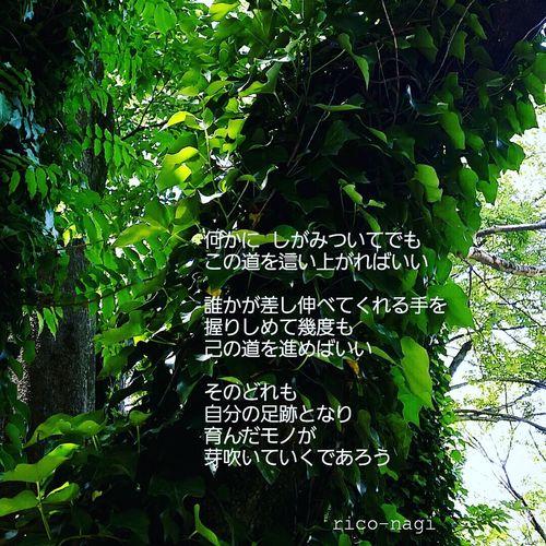 今日と明日は恵方参り。 夜に切り替わるんだけど 今日 参ってきました。 明日も行きます。 チャンスをいただく 攻めの開運。 それを 気付けるか 気付けないか 乗れるか  乗れないか 大きく未来が変わってく Rico-nagi 写真詩集 Photo Japan Photo Poetry