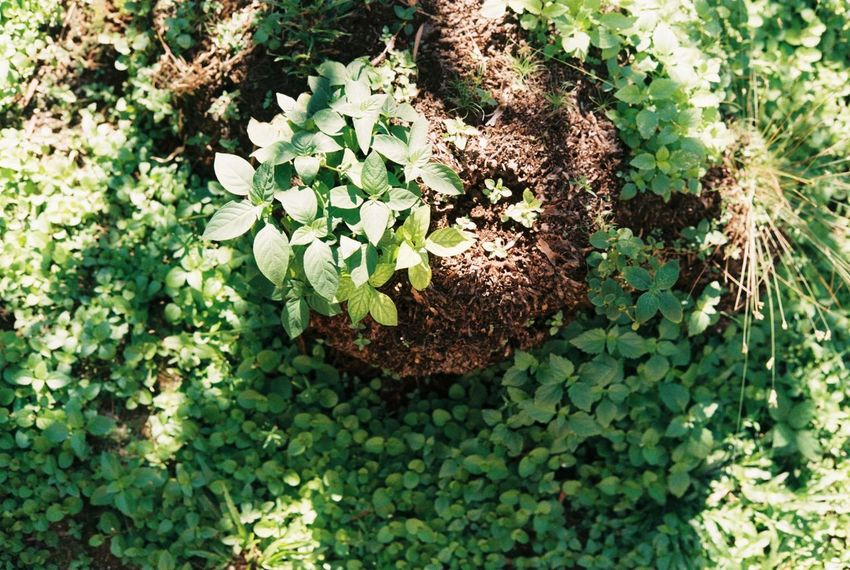Outdoor Photography Nature Growth Plant Nature Outdoors Filmisnotdead Fujifilm Green Color Beauty In Nature Close-up Leaf Day Rangefindercamera Believe In Film Filmcamera Analogue Photography