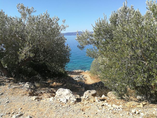 Mediterranean Sea Olive Trees Vacations Beauty In Nature Beach Summer Blue Bluesea
