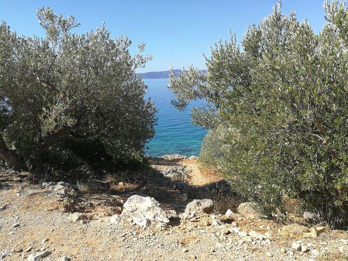 Mediterranean Sea Olive Trees Vacations Beauty In Nature Beach Summer Blue Bluesea