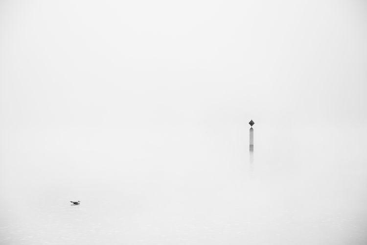 Animal Themes Animal Wildlife Boyu Fog Lake Minimalism Outdoors Sea Bird Sign Tranquil Scene Tranquility Water White