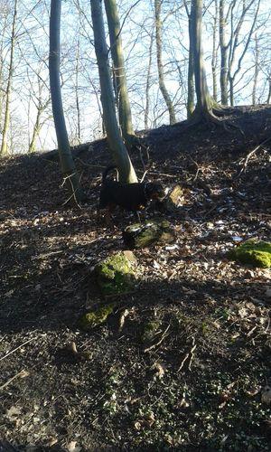 Hunderunde In Deutschland Unterwegsunddraußen Mit Meinem Hund In Germany Nature On Your Doorstep