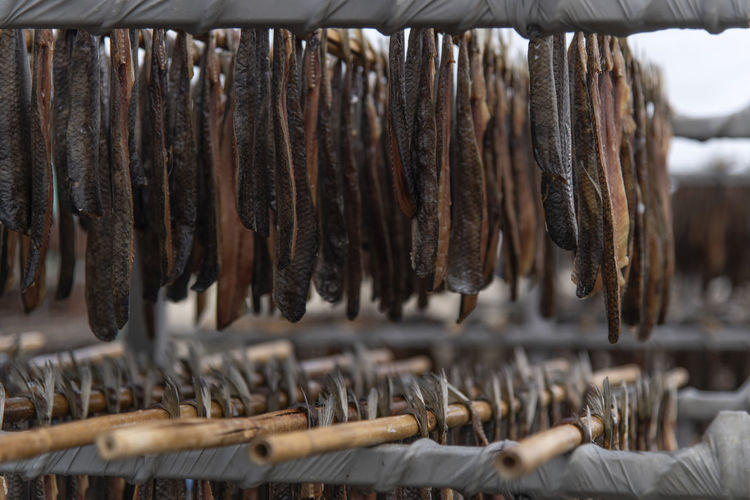 Close-up of drying fishes which are herrings and saury