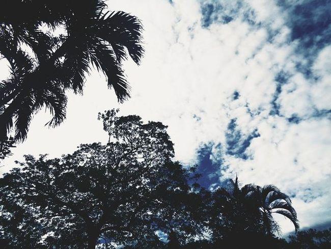 Sky Trees Clouds VSCO Vscofilter Vscot2 Vscosky Vscogood Vscogreat Vscoperfect Vscoalltheway Vscocool Vscophilippines Vscocam Vscocamph VscoCamPHF Vscophilippines Sonydscw830 ☁🌳