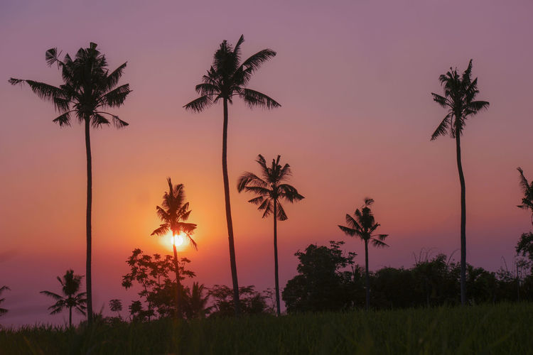 Plant Sunset Sky Tree Beauty In Nature Scenics - Nature Tranquil Scene Growth Tranquility Palm Tree Orange Color Nature Tropical Climate Silhouette No People Land Non-urban Scene Coconut Palm Tree Sun Idyllic Outdoors Tropical Tree Romantic Sky