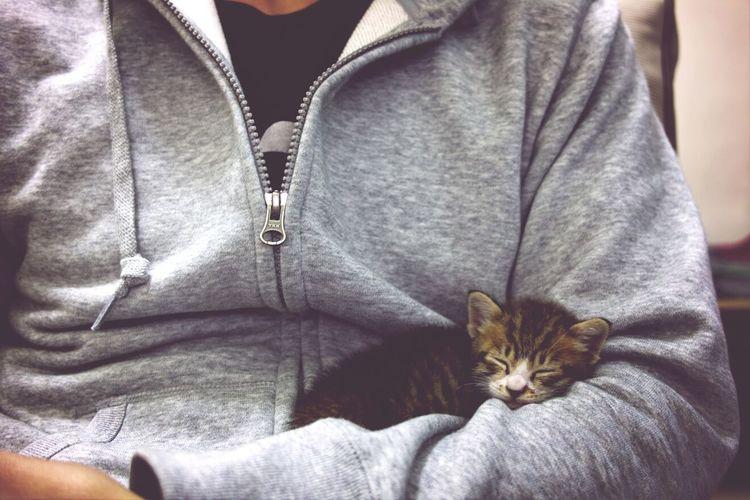 Cat Kitten DP2x