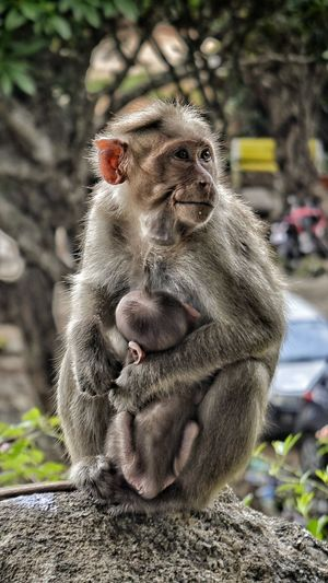Monkey Thief Motherhood MotherhoodDuties Eye4photography  Eyemphotography Beautiful Day
