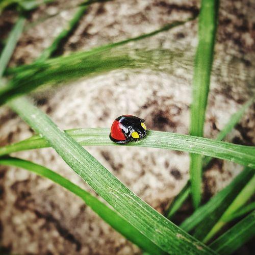 ladybug Insect Animals In The Wild Animal Themes One Animal Ladybug Leaf Day