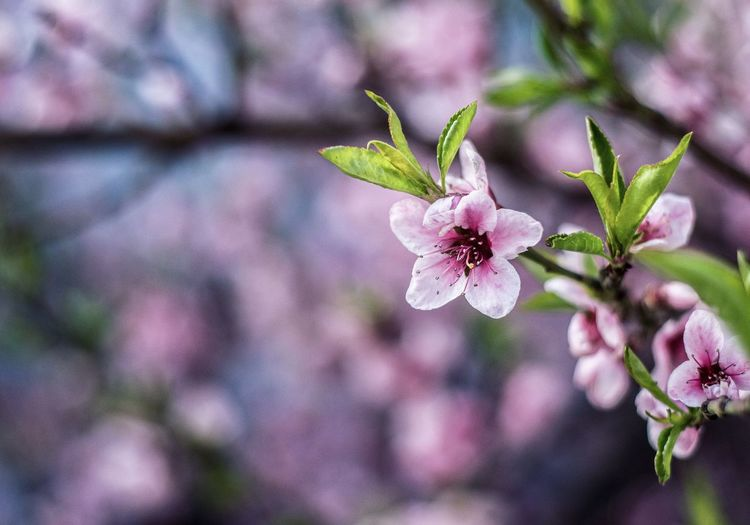 EyeEm Selects Flower Plant Pink Color Focus On Foreground Growth Close-up Outdoors No People Day Nature Fragility Springtime Flower Head Freshness Beauty In Nature Natural Inspirational Trees Sunshine Sunlight Sun Austria Summer Perspectives On Nature