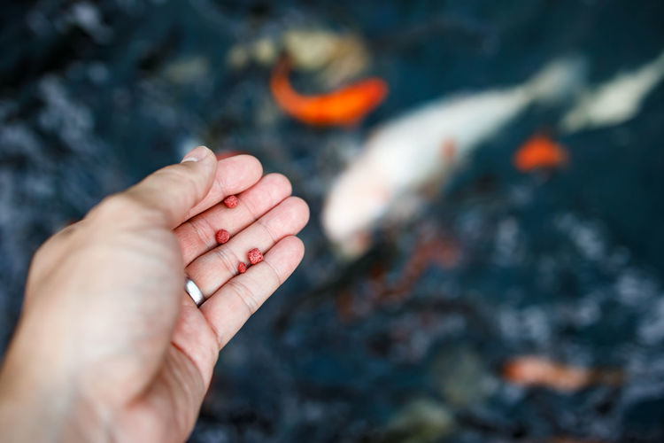 Cropped image of hand holding fish food