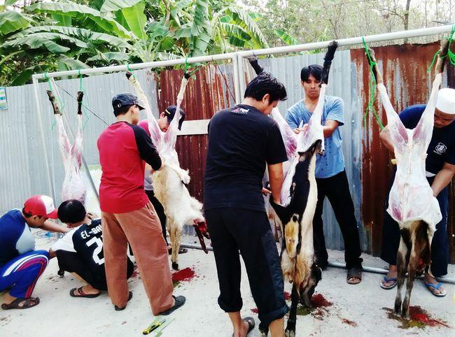 Crafting the sheep Taking Photos IdulQurban Qurban