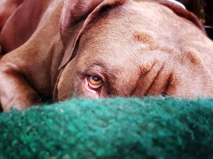 Close-up of dog staring