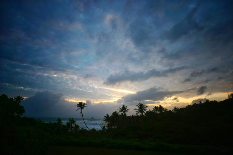 Sunset Silhouettes Palms PalmsTrees Clouds And Sky Cloud - Sky Cloud_collection  Tree Sunset Sky Landscape Dramatic Sky