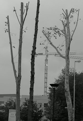 Welcome To Black Tree Social Issues Nature Tree Trunk Landscape Environmental Issues Branch Sky No People Outdoors Autumn Day Crane Huawei P9 Leica Cranespotting City Expanding City Under Construction Eyem Diversity environment vs construction. in contrast, yet, we need both!