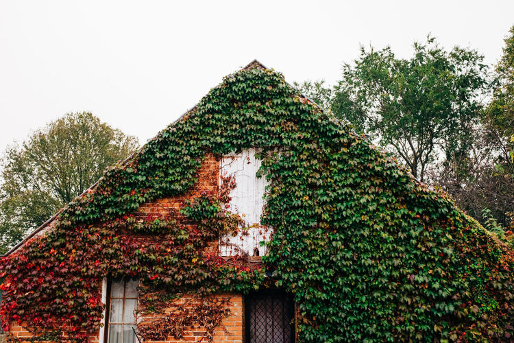 House with vine