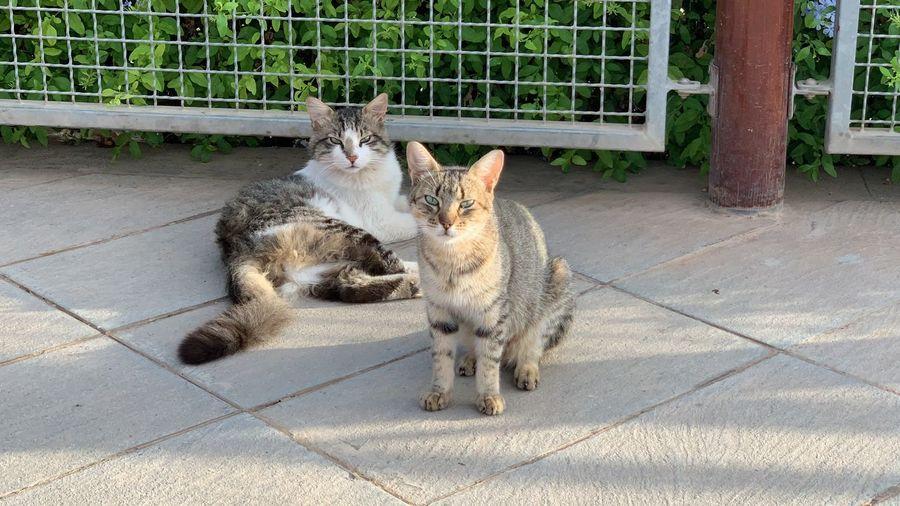 Cats sitting in a cat