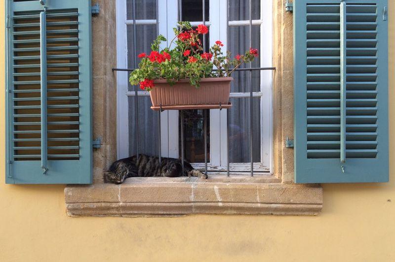View of cat in window