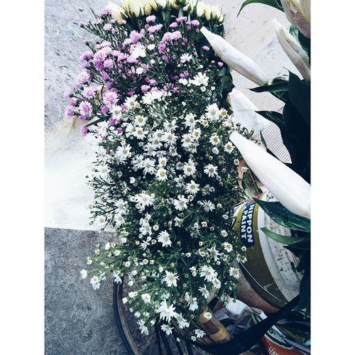 Là an yên an bài, hay là em cố mường tượng lòng mình đã yên? --- Hoa chụp trộm của gánh hàng rong buổi sáng suýt đi học muộn.. Flower Anyên