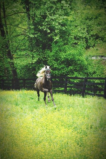 """Man is not the only creature that seeks freedom and space"" - Anthony Douglas Williams Kentucky  Field Of Dreams Horse Freedom"