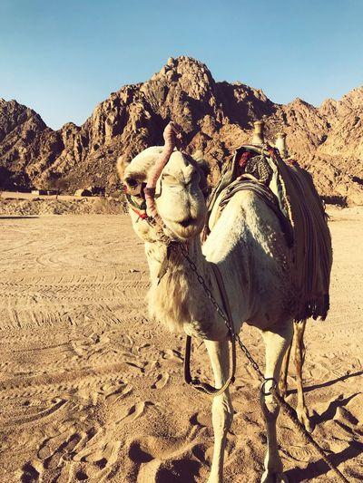 Photo taken in Sharm Ash Shaykh, Egypt