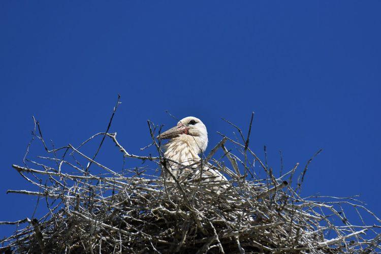 Bird perching on nest against clear blue sky
