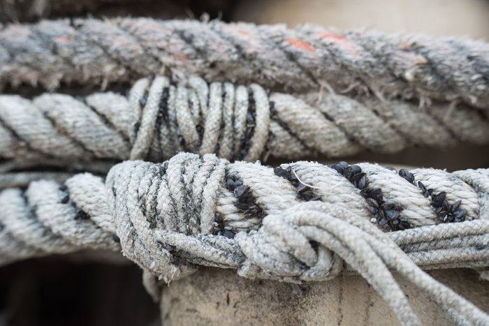 Close-up Detail Fishing Fishing Utensils Focus On Foreground Knot Marine Mussles Naval No People Old Rope Ropes Sea Sea Knot Selective Focus Sharp Texture