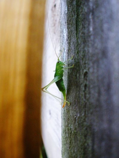 A Cricket in
