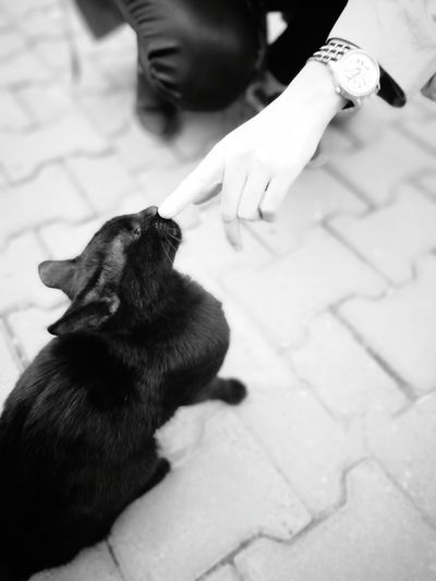 One Animal Pets Outdoors Cat Black Black&white Work Garden Colleague What Is That? Sunny Day Human Hand Care One Person Cute