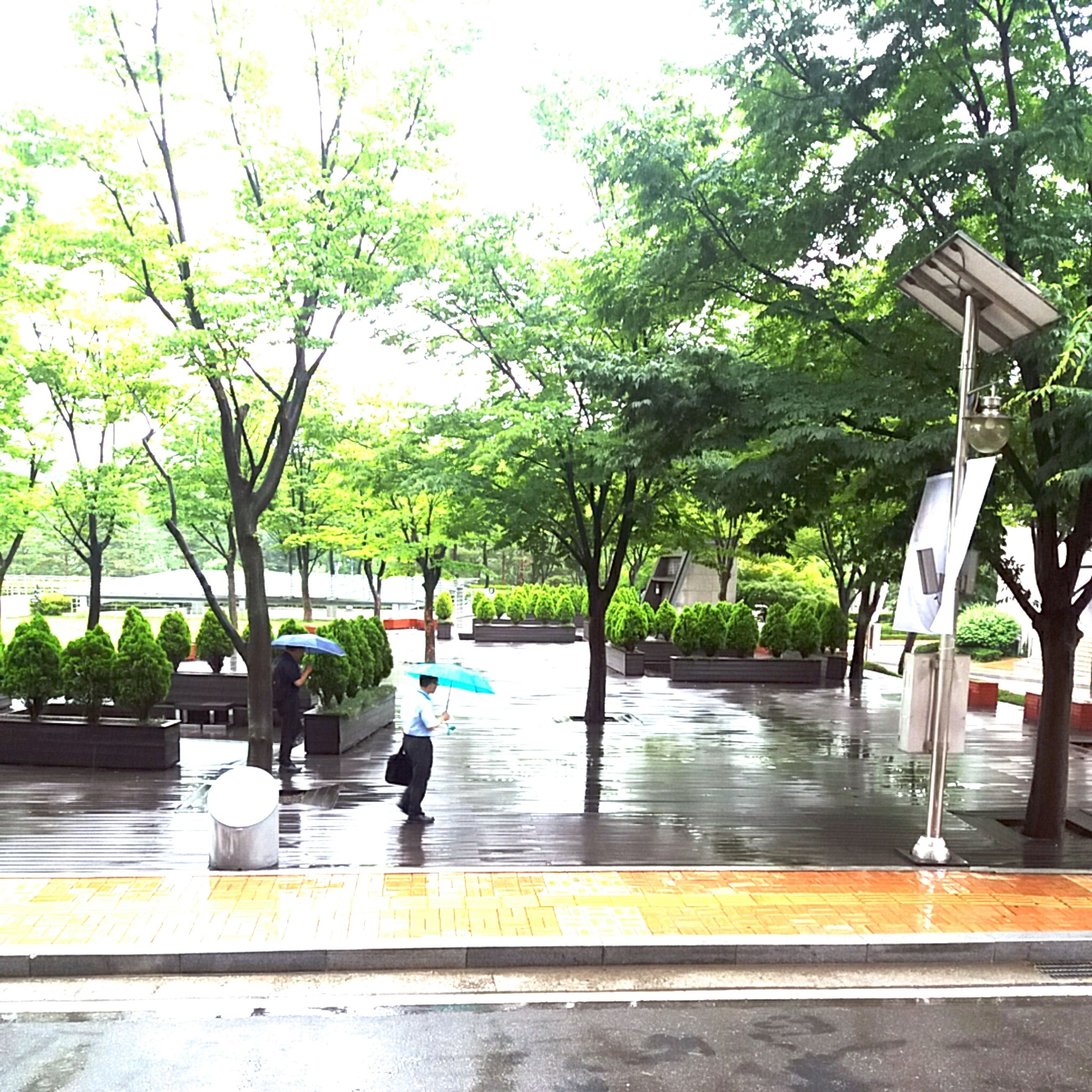 tree, water, growth, park - man made space, nature, reflection, street light, incidental people, sunlight, yellow, street, outdoors, day, branch, tree trunk, railing, bench, city, sidewalk