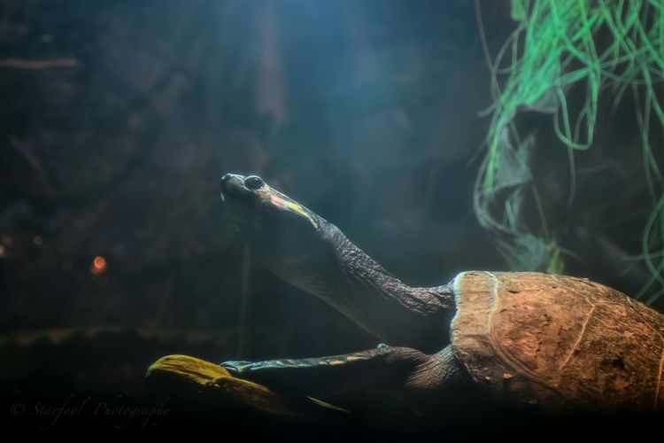 """Knowing yourself is the beginning of all wisdom."" ~Aristotle Eye Em Best Shots Light And Shadow Nikon Nature_collection Eye Em Best Edits Animal Photography Turtle Eye4photography  Aquatic Life Sheddaquarium Have a great day my EE friends! ??"