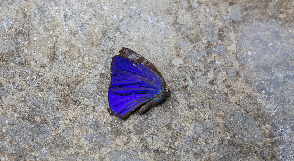 Animal Themes Beauty In Nature Butterfly Close-up Nature No People Outdoors