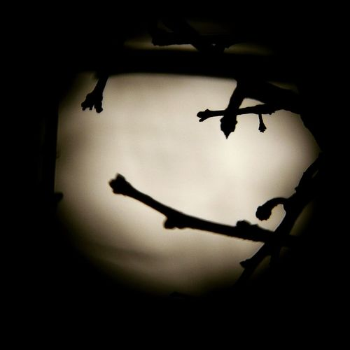 Full Moon🌝 Branches And Sky Branches And Moon Draw On The Moon Hanging Out Relaxing Hi! Enjoying Life That's Me Taking Photos Moon Shots Moon_lovers Moonbeauty Moon_collection Moonlight Moonshot Learn & Shoot: After Dark