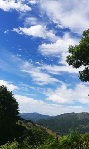 Copey Dota Tree Cloud - Sky Tranquility Mountain Sky Nature Landscape Beauty In Nature First Eyeem Photo