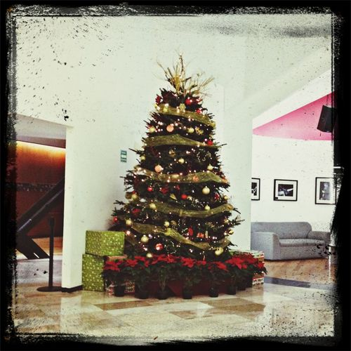 Christmas Tree Taking Photos Hello World Check This Out