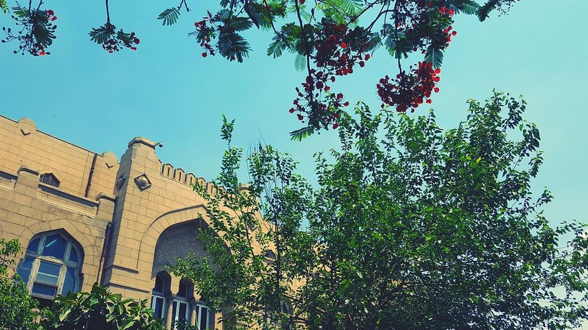 Architecture History Tree Low Angle View Day Ancient Built Structure Outdoors No People Sky The Great Outdoors - 2017 EyeEm Awards BYOPaper! EyeEmNewHere University Campus University Campus Ain Shams Uni Egypt Cairo Egypt Faculty Of Engineering Abdo Basha The Architect - 2017 EyeEm Awards