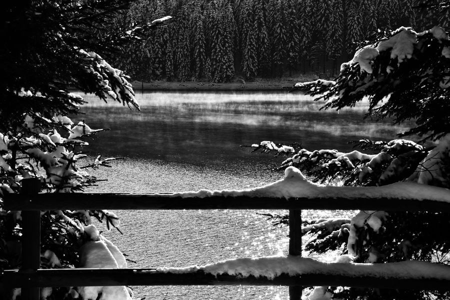 Water Tree Lake Outdoors Nature No People Scenics Beauty In Nature Outdorphotography Blackandwhite EyeEm Best Shots - Black + White EyeEm Best Shots - Landscape EyeEm Best Shots - Nature Getting Inspired EyeEm First Photo Nature Collection Be. Ready. EyEmNewHere Capture The Moment Eye4photography  Snowy Forest Winter Wonderland EyeEm Best Shots - My Best Shot EyeEm Special Edition EyeEm Selects Outdoors