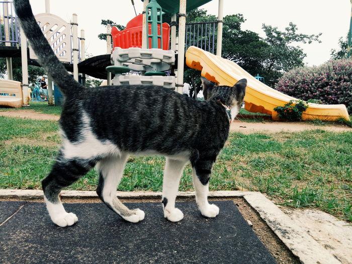 Cat looking away in city