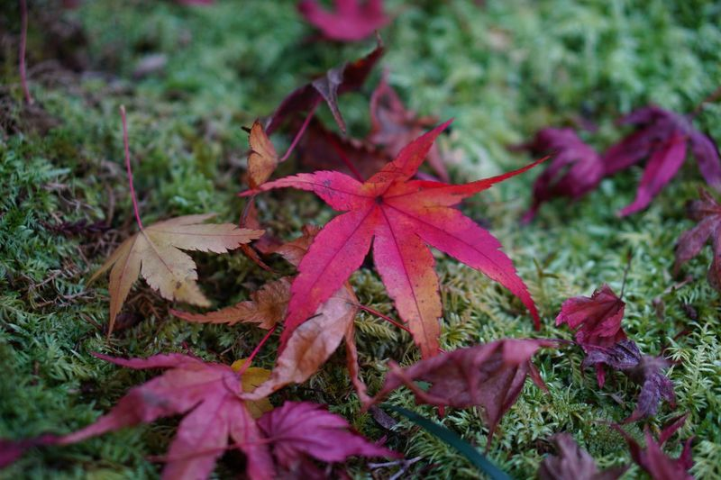 Growth Leaf Nature Leaves Close-up Fragility Plant Day No People Outdoors Autumn Tranquility Moss Beauty In Nature Freshness EyeEm Nature Lover