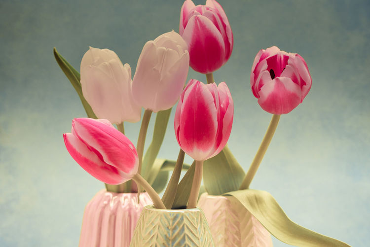 Tulip Flower Flowering Plant Plant Beauty In Nature Vulnerability  Pink Color Fragility Petal Freshness Close-up Inflorescence Flower Head Nature Tulip Growth No People Focus On Foreground Plant Stem Indoors  Vase Flower Arrangement Softness StillLifePhotography EyeEm Gallery EyeEm Nature Lover