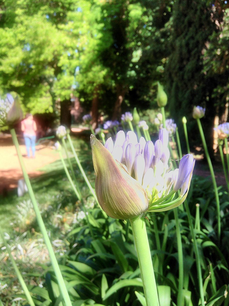 flower, fragility, growth, petal, nature, freshness, beauty in nature, flower head, plant, close-up, green color, focus on foreground, day, outdoors, no people, blooming, grass