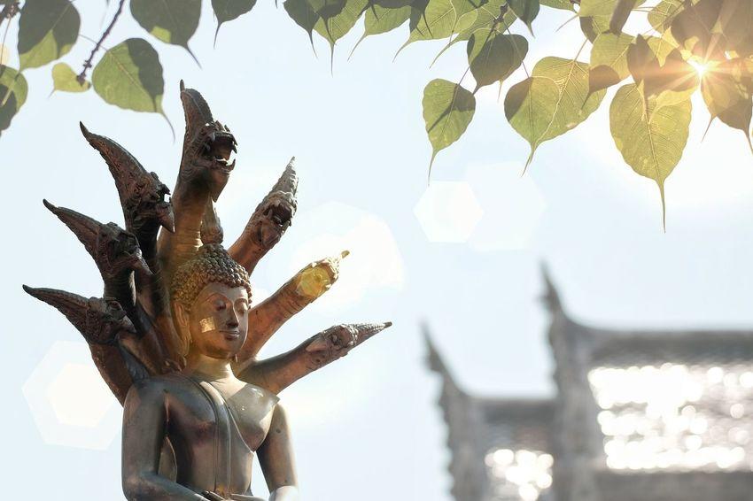 Visakha Puja Day , Buddha statue , bodhi leaf with len flares Buddha Buddhism Buddhist Temple Buddha Statue Buddhist Bodhi Tree Bodhi  Bodhi Leaf Respect Riligion People Heart Temple Vesak Day Wesakday Nature Sun Light Lens Flare Cultures Thailand Culture Traditional Thailand Traditional Bright Under Tree