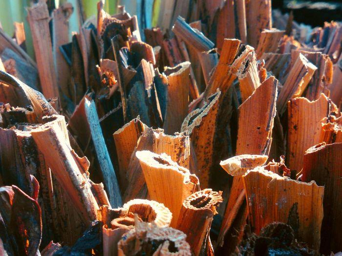 Cut Bamboo