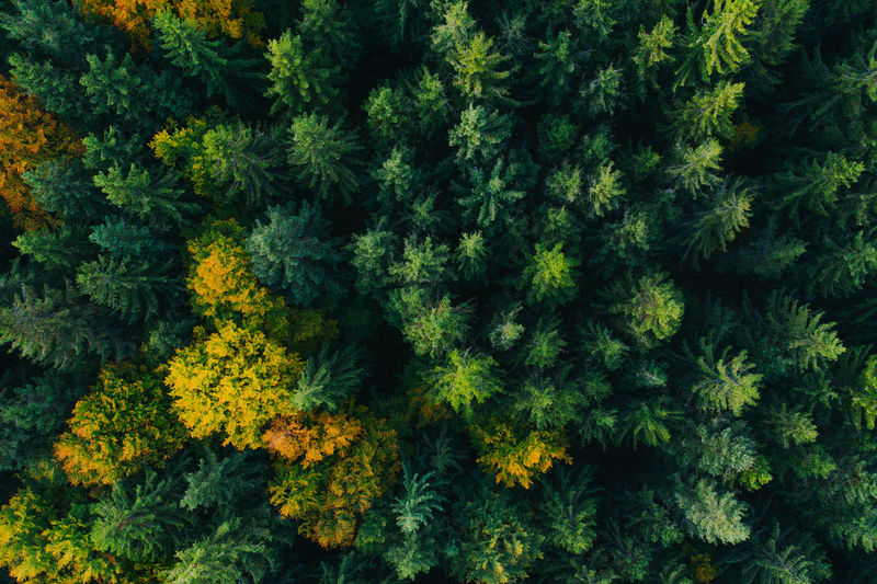 High angle view of flowering plants in forest