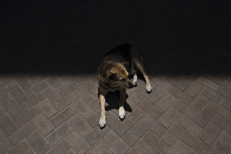 Dog Canine Mammal One Animal Pets Domestic Domestic Animals High Angle View Vertebrate No People Footpath Full Length Street Flooring Outdoors Paving Stone Light And Shadow Dogs Of EyeEm Dogslife Shadows & Lights