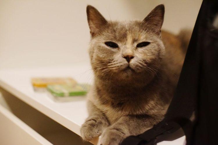 Cat Pets Domestic Cat Domestic Animals Domestic Mammal Feline