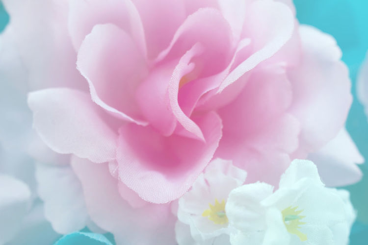 Freshness Plant Beauty In Nature Pink Color Flowering Plant Close-up Fragility Vulnerability  Flower Petal Inflorescence Nature Flower Head No People Growth Peony  Selective Focus Outdoors Day Rosé Softness