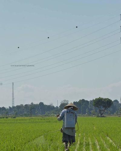 Rear view of farmer spraying fertilizer in field against clear sky