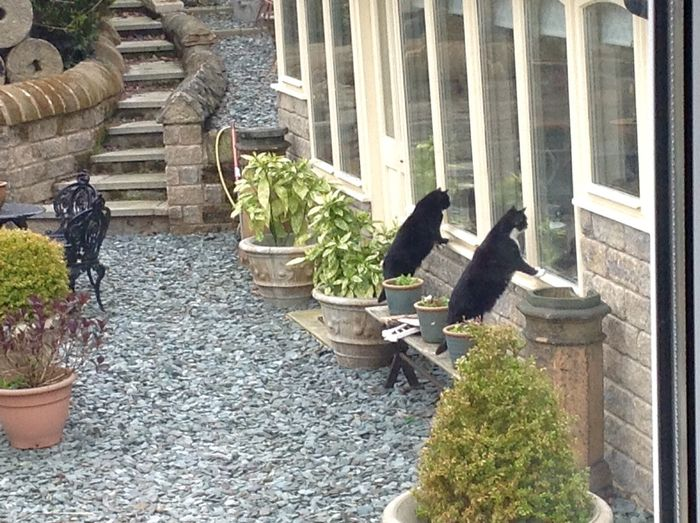 Architecture Building Exterior Cats Day Full Length Funny Looking Outdoors Perching Plant Side View Stone Material
