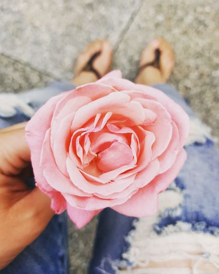 Flower Rose - Flower Petal Fragility Nature Flower Head Holding Close-up Beauty In Nature Human Body Part One Person Day Freshness Pink Color People Outdoors Human Hand Adult