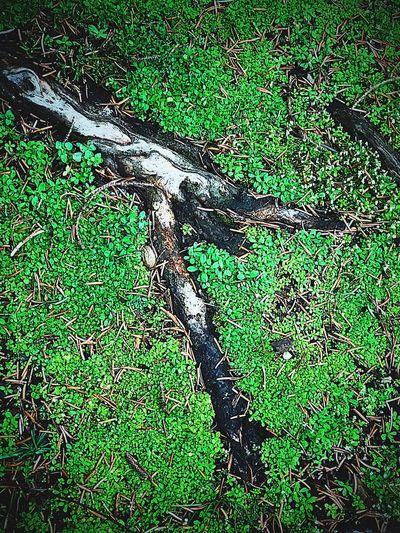 Natured soil